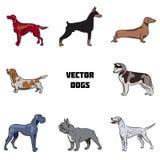 Vectorreeks honden van diverse rassen Stock Illustratie