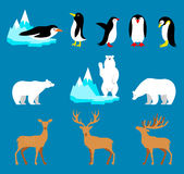 Vectorreeks Noordpool en Antarctische dieren Pinguïn, ijsbeer, rendier Royalty-vrije Stock Foto