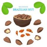 Vectorreeks noten Het paranootfruit, geheel, pelde, half stuk, okkernoot in shell, bladeren Stock Foto's