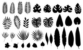 Vectorreeks silhouet tropische bladeren, bloemen royalty-vrije illustratie