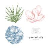 Vectorreeks succulents Hand getrokken botanische die kunst op witte achtergrond wordt geïsoleerd Stock Afbeeldingen