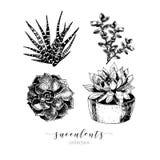 Vectorreeks succulents Hand getrokken botanische die kunst op witte achtergrond wordt geïsoleerd Stock Foto