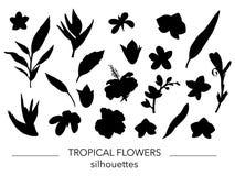 Vectorreeks tropische bladeren en bloemensilhouetten royalty-vrije illustratie