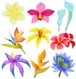 Vectorreeks Tropische bloemen Stock Foto's