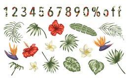 Vectorreeks tropische die bloemen en bladeren op witte achtergrond worden geïsoleerd Heldere realistische inzameling van exotisch vector illustratie