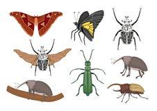 Vectorreeks tropische insecten royalty-vrije illustratie