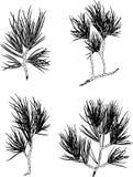 Vectorreeks van de boomtak van de Kerstmispijnboom De illustratie van de contour stock afbeelding