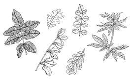 Vectorreeks van decoratieve tak van groene bladeren met gestreept royalty-vrije stock foto