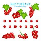 Vectorreeks van een verse rode aalbes Royalty-vrije Stock Afbeelding