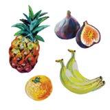 Vectorreeks van kleurkrijtjefruit Stock Afbeeldingen