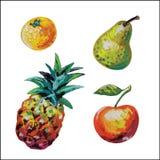 Vectorreeks van kleurkrijtjefruit Royalty-vrije Stock Fotografie