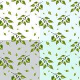 Vectorreeks van naadloos patroon van de de groene brunches en bladeren van de berkboom royalty-vrije illustratie