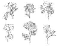Vectorreeks verschillende bloemen - nam, chrysant en papaver met bladeren toe royalty-vrije stock fotografie