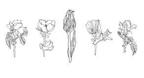 Vectorreeks verschillende bloemen - nam, chrysant en papaver met bladeren toe stock foto's