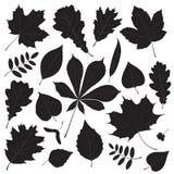Vectorreeks verschillende geïsoleerde silhouetten van het boomblad Stock Afbeelding