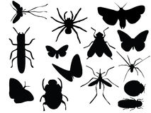 Vectors of insects. Vector silhouettes of different insects Royalty Free Stock Photography