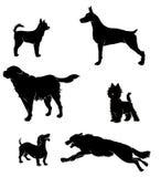 Vectors le siluette dei cani Immagine Stock