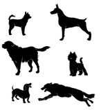 Vectors silhouettes of dogs Stock Image