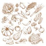 Vectorschets geïsoleerde groentenpictogrammen Stock Afbeelding