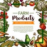 Vectorschetsaffiche van landbouwbedrijf organische groenten Royalty-vrije Stock Afbeeldingen