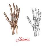 Vectorschetspictogram van menselijke handbeenderen of verbindingen stock illustratie