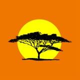 Vectorsilhouet van acaciaboom op de achtergrond van de safarizonsondergang A stock fotografie
