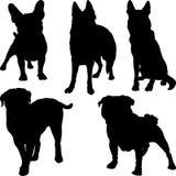 Vectorsilhouetten van verschillende rassen van honden binnen Stock Afbeelding