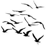 Vectorsilhouetten van vliegende zeemeeuwen, geïsoleerd zwart overzicht Stock Afbeeldingen