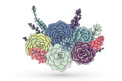 Vectorsucculents bloemensamenstelling Succulent ornament Natur stock illustratie