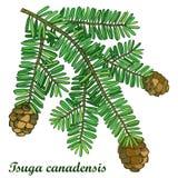 Vectortak met overzicht Tsuga of oostelijke Canadese die dollekervel op witte achtergrond wordt geïsoleerd Naalddollekervelboom Royalty-vrije Stock Foto's