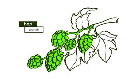Vectortak van hop Plantkunde ruw symbool Kunstmalplaatje stock illustratie