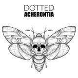 Vectortekening van gestippelde zwarte van de Doods` s hoofddiehavik de mot of van Acherontia atropos op witte achtergrond wordt g vector illustratie