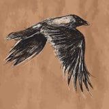 Vectortekening van vliegende Afrikaanse kraai op ambacht Royalty-vrije Stock Afbeeldingen