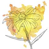 Vectortekeningsbloemen van madeliefje royalty-vrije illustratie