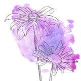 Vectortekeningsbloemen van madeliefje stock illustratie