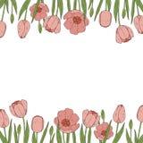 Vectortulpengrenzen Bloemen frame vector illustratie