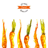 Vectorwatercolor carrots background Stock Photo