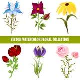 Vectorwaterverf bloemeninzameling royalty-vrije illustratie