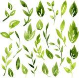 Vectorwaterverf groene bladeren en takken Royalty-vrije Stock Foto's