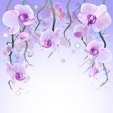 Vectorwaterverfachtergrond met orchideeën Royalty-vrije Stock Afbeelding