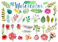 Vectorwaterverfaquarelle bloemen en bladeren Stock Foto