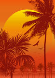 Vectot Tropical sunrise. Tropical sunrise with gradient yellow sun and silhouette of palm trees, soaring birds and mountains in the background of red sky Royalty Free Stock Photos