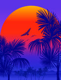 Vectot Tropical sunrise. Tropical sunrise with pink gradient sun and silhouette of palm trees, soaring birds and mountains in the background of blue sky Royalty Free Stock Image