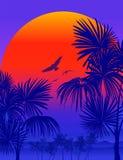 Vectot Tropical sunrise Royalty Free Stock Image