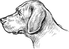 Dog profile. Vectpr image of a head of a dog vector illustration