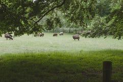 Veda attraverso una foresta su un pascolo fotografie stock libere da diritti