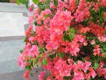 Vedi che questo fiore è molto ed incantare immagini stock