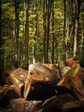 Vedträ i en skog Arkivfoto