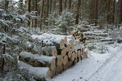 Vedträ i skogen Royaltyfri Fotografi