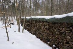 Vedträ i winterly skog arkivbild